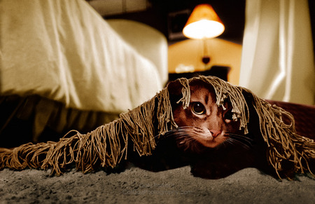 Max hides under the rug -  featured in June 2014 Popular Photography.