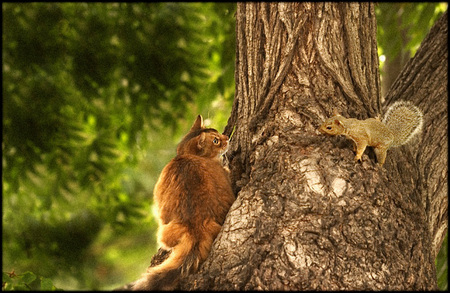Domestic disturbance...    Squirrel claims walnut tree passed down for generations.  Cat claims walnut tree is Public Domain covered by Fair Use laws...  Both parties threaten litigation/homicide...  Squirrel loses ALL his nuts in housing meltdown...hoping for bailout.