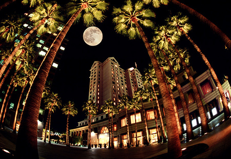 Circle of Palms & Fairmont Plaza / San Jose, CA