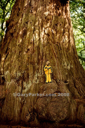 "The humbling enormity of the massive redwood tree - the world's largest living thing - creates a striking contrast to Punjabi Primordial Dwarf Romeo Dev, at 20 years old, 2 ft 9"" and 21 pounds one of the smallest adult human beings on Earth."