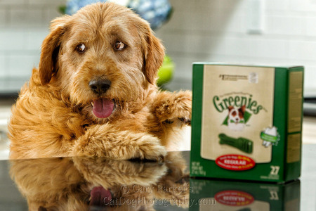 Greenies ad campaign outtake...