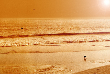 Magical morning for a beach dog...